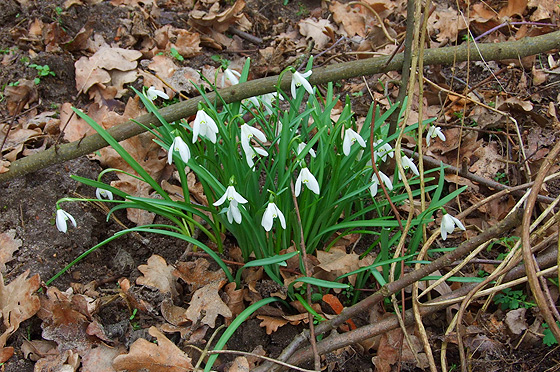 Na Tropie Wiosny Pierwsze Wiosenne Kwiaty Marzec