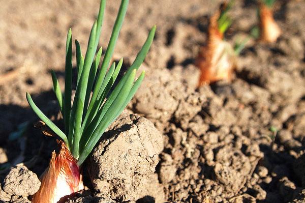 wiosenne-warzywa