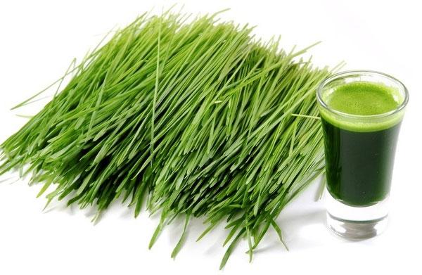 zielony mlody jeczmien
